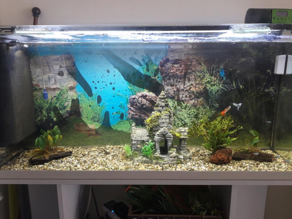 Présentation de mon aquarium  16181412