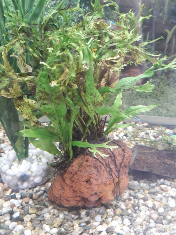 Présentation de mon aquarium  16182211