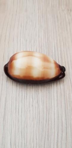 Talparia_talpa_(Linnaeus_1758) 20210448