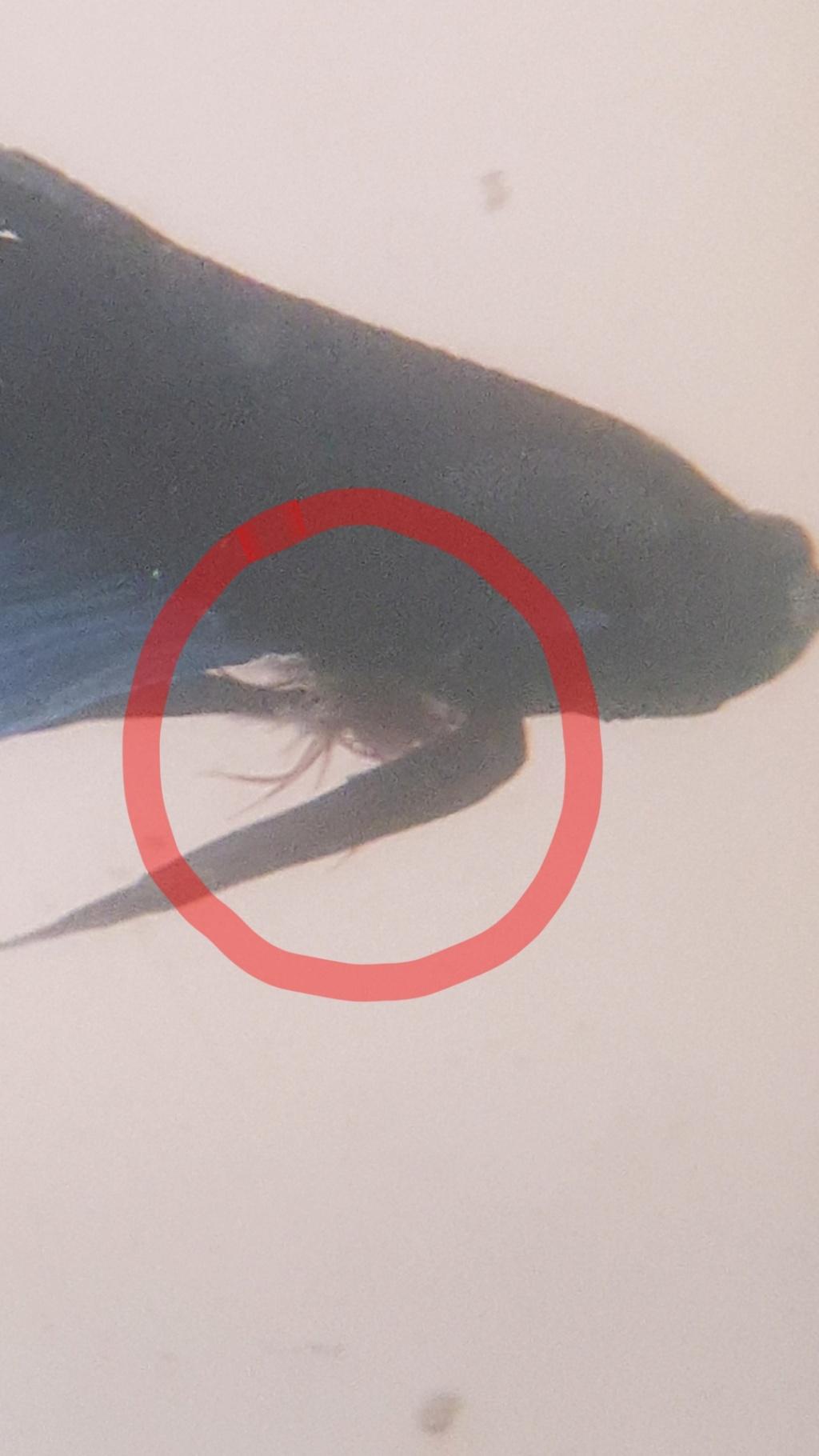 parasite inconnu 20211010