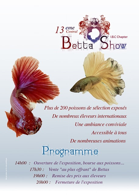 13me Auvergne Betta Show 18-19 octobre 2019 Img_2810