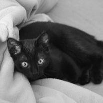 Bamcar cats 12750710