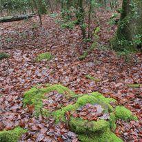 Brocéliande au levé d'un jour d'automne qui se transforme en jour de pluie 19503110
