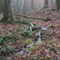 Brocéliande au levé d'un jour d'automne qui se transforme en jour de pluie 19504710