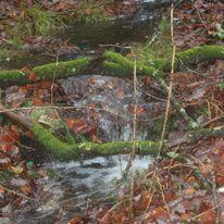 Brocéliande au levé d'un jour d'automne qui se transforme en jour de pluie 41218710