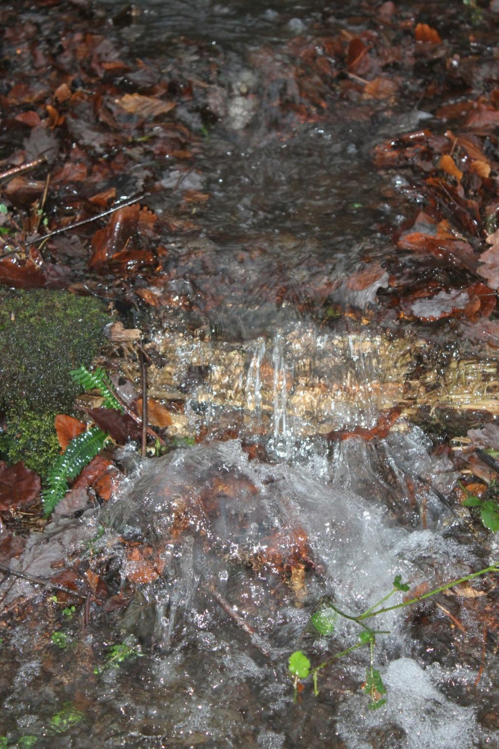 Brocéliande au levé d'un jour d'automne qui se transforme en jour de pluie 45761411