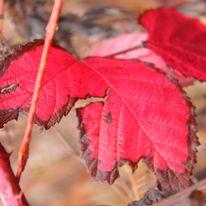 Brocéliande au levé d'un jour d'automne qui se transforme en jour de pluie 46382810