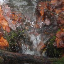Brocéliande au levé d'un jour d'automne qui se transforme en jour de pluie 46647610