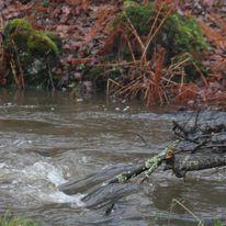 Brocéliande au levé d'un jour d'automne qui se transforme en jour de pluie 47388310