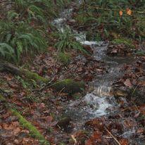 Brocéliande au levé d'un jour d'automne qui se transforme en jour de pluie 47518010