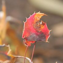 Brocéliande au levé d'un jour d'automne qui se transforme en jour de pluie 56068_10