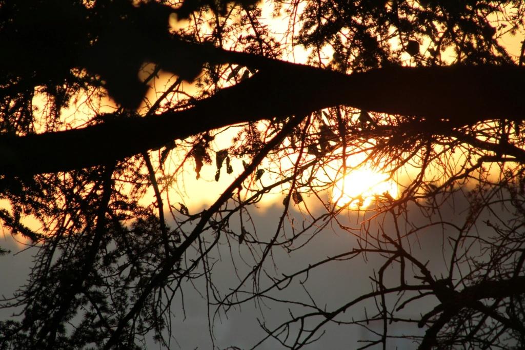 Brocéliande au levé d'un jour d'automne qui se transforme en jour de pluie 62126510