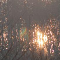 Brocéliande au levé d'un jour d'automne qui se transforme en jour de pluie 70435410