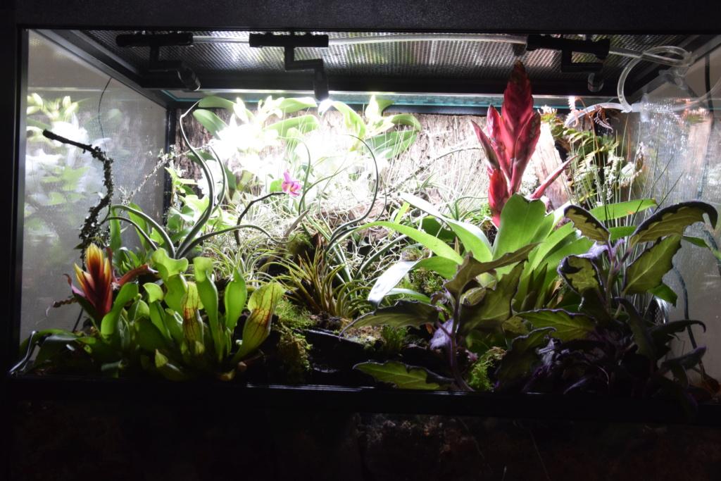 Paludarium pour dendrobates 60x45x45 Orchid10