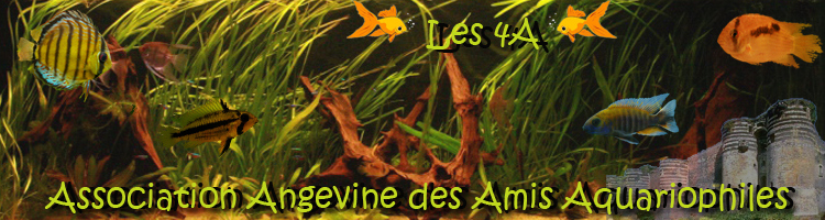 ASSOCIATION AQUARIOPHILE D' ANGERS