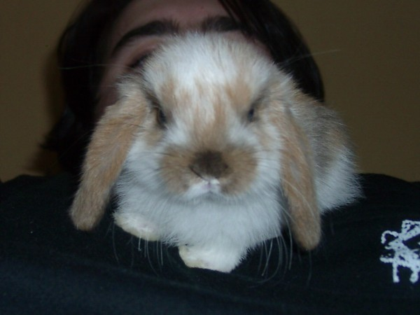 Ma lapine... Laïka <3 Laika112