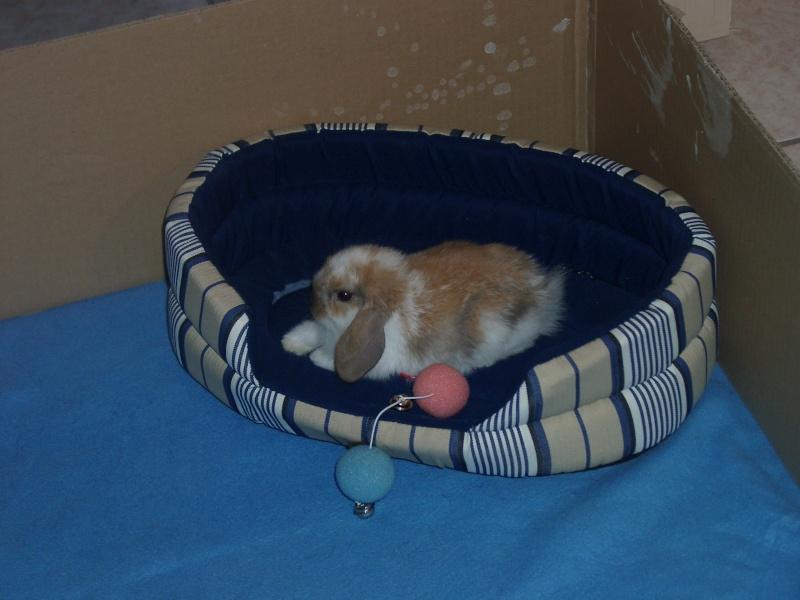 Ma lapine... Laïka <3 Laika214