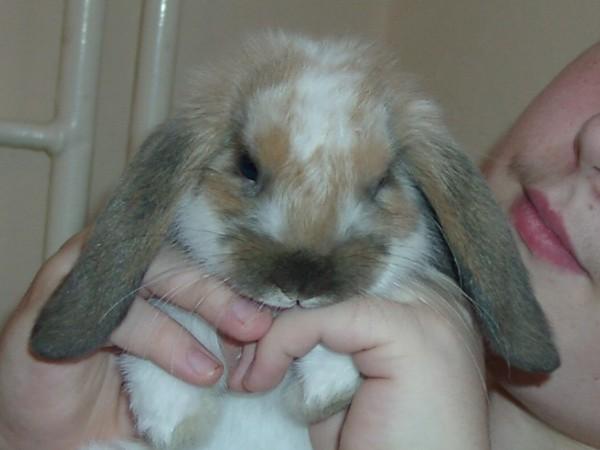 Ma lapine... Laïka <3 Laika311