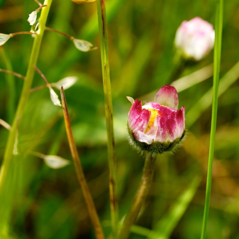 petite fleur Carra11