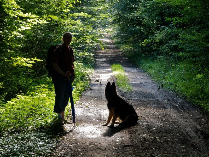 ombre de chien Ombre10