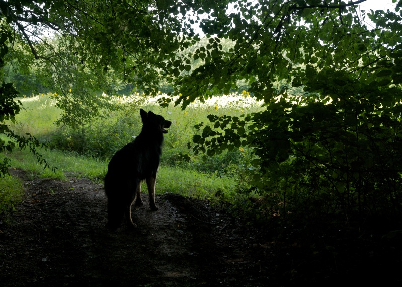ombre de chien Ombre_10