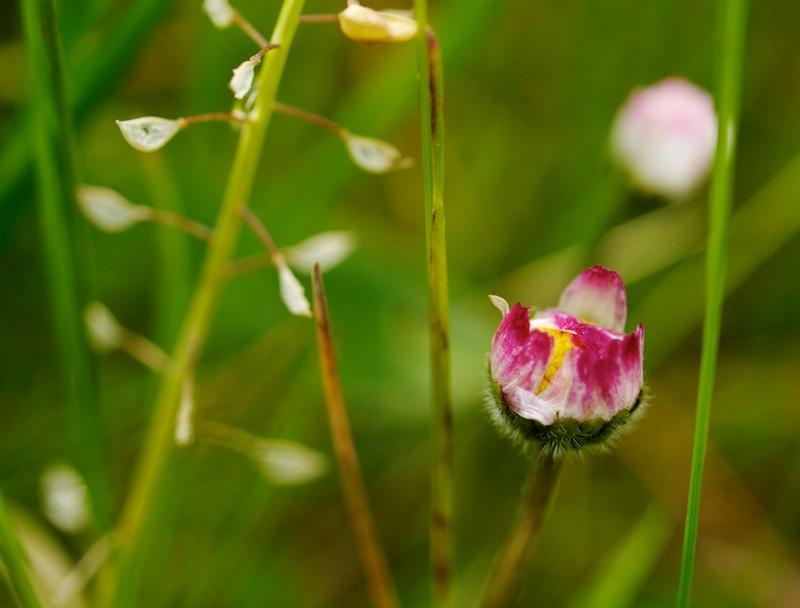 petite fleur Rectan10
