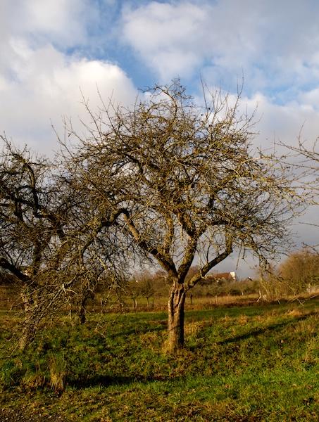 l'âme du viel arbre Tassa10