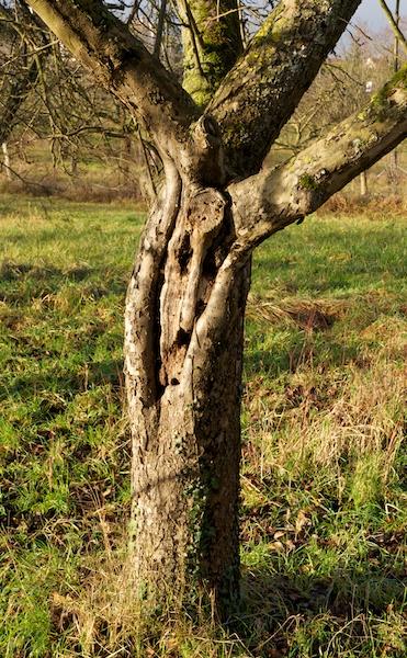 l'âme du viel arbre Tassa_10