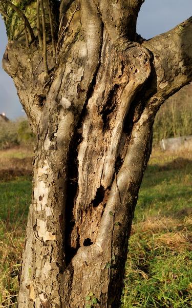 l'âme du viel arbre Tassa_11