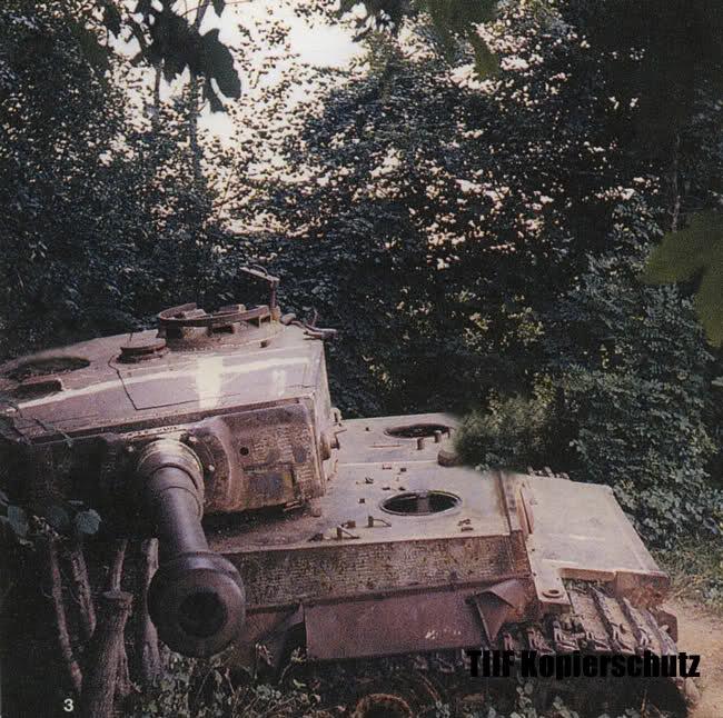 Le Tigre de vimoutiers - France 2duigj11