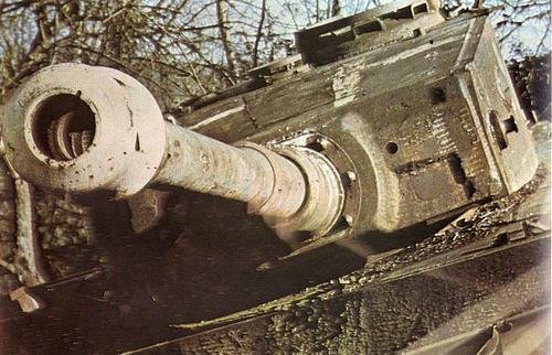 Le Tigre de vimoutiers - France Knocke10