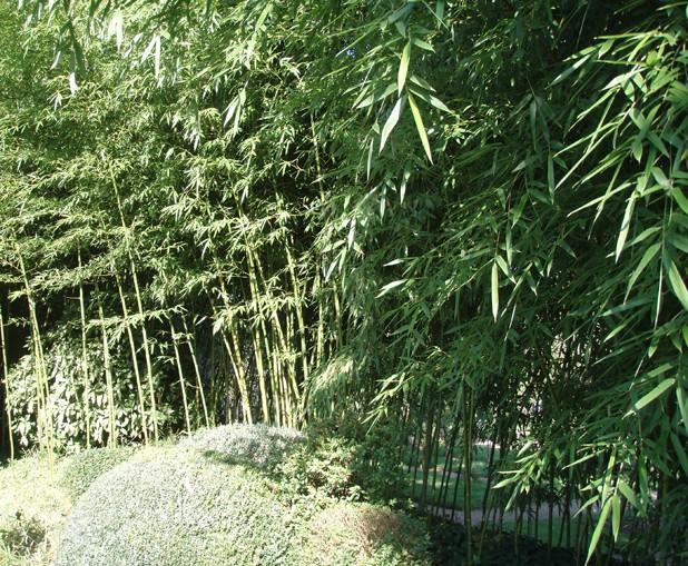 Visite du jardin Albert Kahn Bambou10