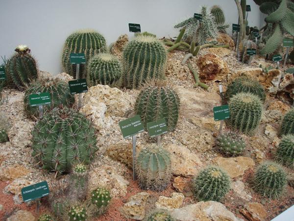 Petite visite des grandes serres du Jardin des plantes à Paris Cactus16
