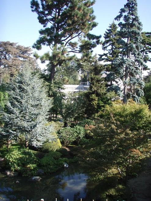 Visite du jardin Albert Kahn Foret10