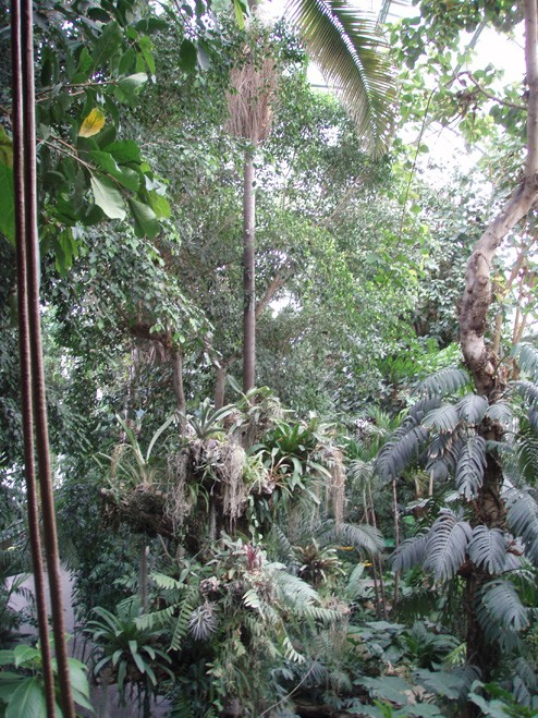 Petite visite des grandes serres du Jardin des plantes à Paris Jungle10