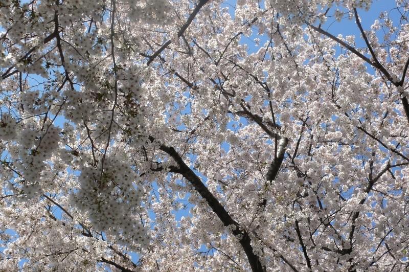 En direct du Japon, aujourd'hui ....   L1070611