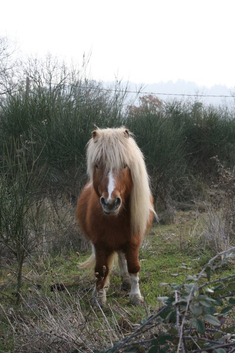 Mon petit poney Lucky 19854110