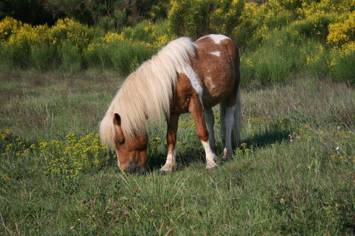 Mon petit poney Lucky 23012910