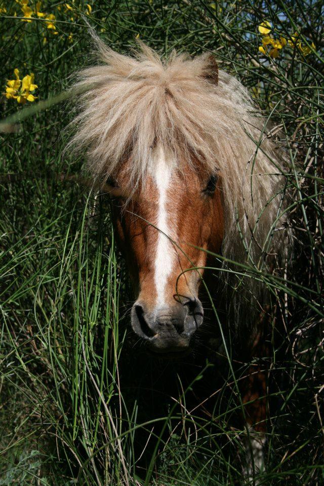 Mon petit poney Lucky 31708610