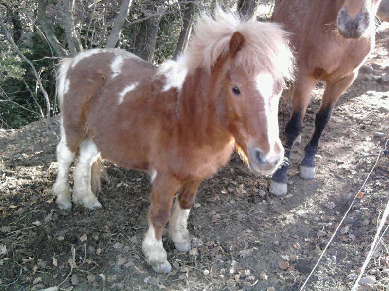 Mon petit poney Lucky 39107210