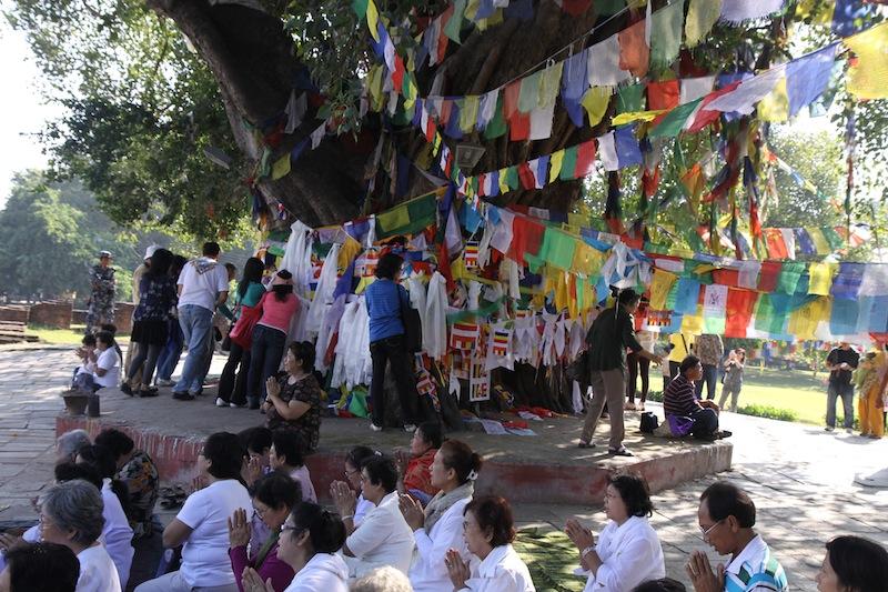 L'arbre de l'illumination de Bouddha Arbre_10