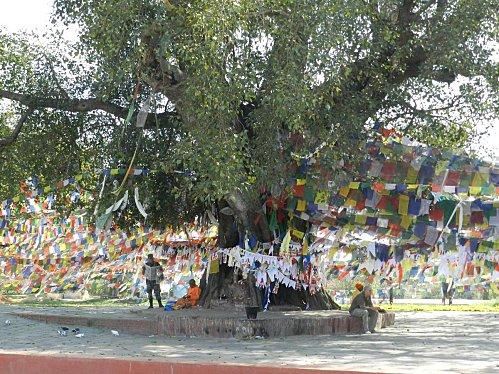 L'arbre de l'illumination de Bouddha Arbre_11