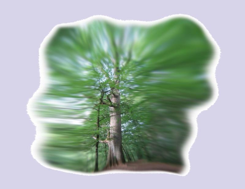 Quand l'auras des arbres fusionnent avec celles des hommes Aura_d11
