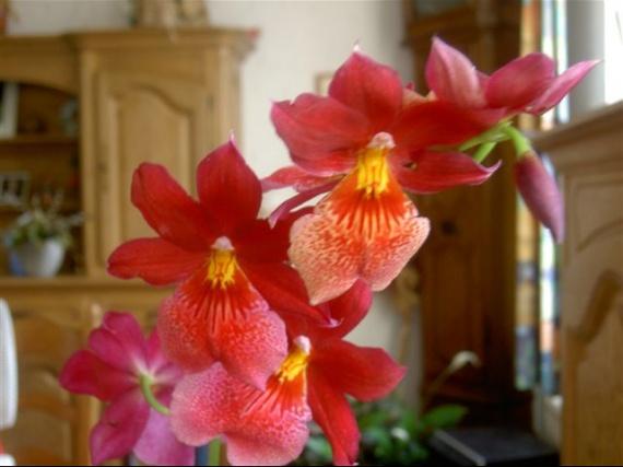 les fleurs Burrag10