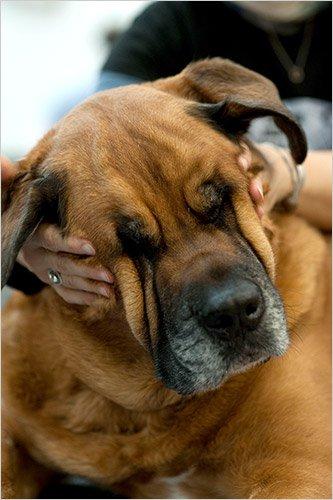 Le Doga ou le yoga avec son chien Doga10