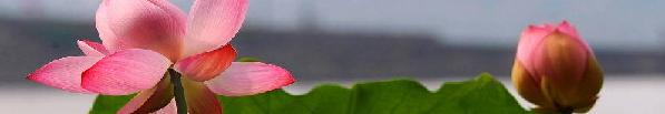 Le rêve de Tao Fleur_10
