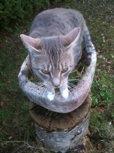 Présentation et requête (chat perdu) Kezia12