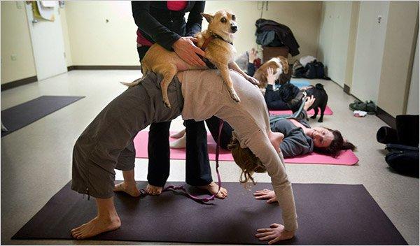 Le Doga ou le yoga avec son chien Kristy10