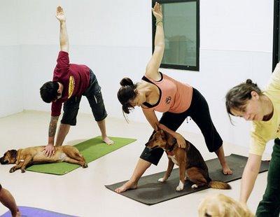 Le Doga ou le yoga avec son chien Kristy12
