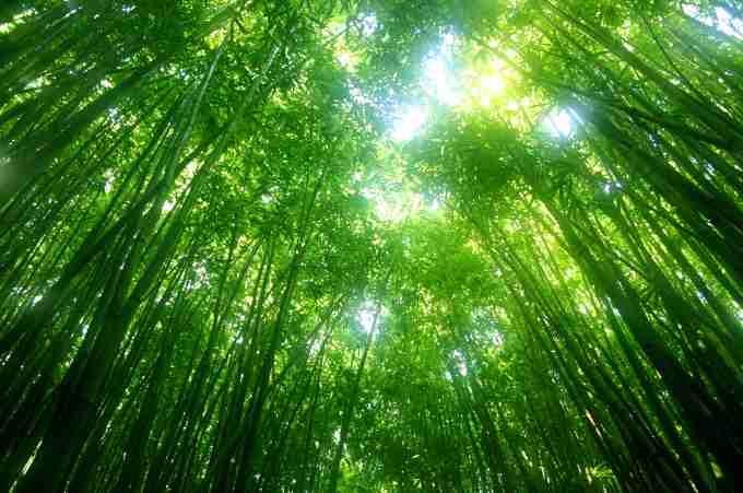 Comment invoquer l'Ange HABUHIAH Nature10